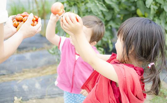 子供が野菜を採っているイメージ写真